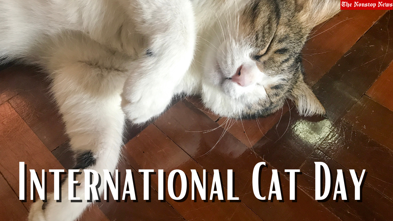 International Cat Day 2021 Quotes, Poster, Images, Memes, Messages, and Greetings to Share