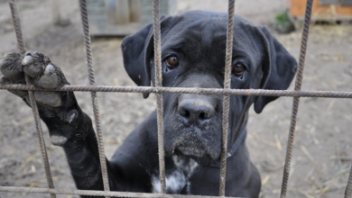 4 pawsome strategies to create a viral fundraising campaign for your animal shelter